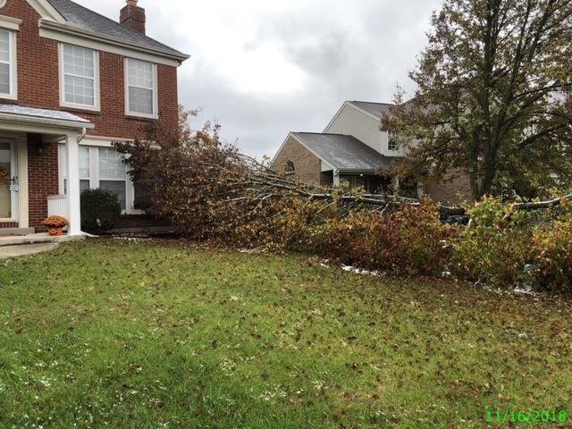 Tree into Neighbor's house