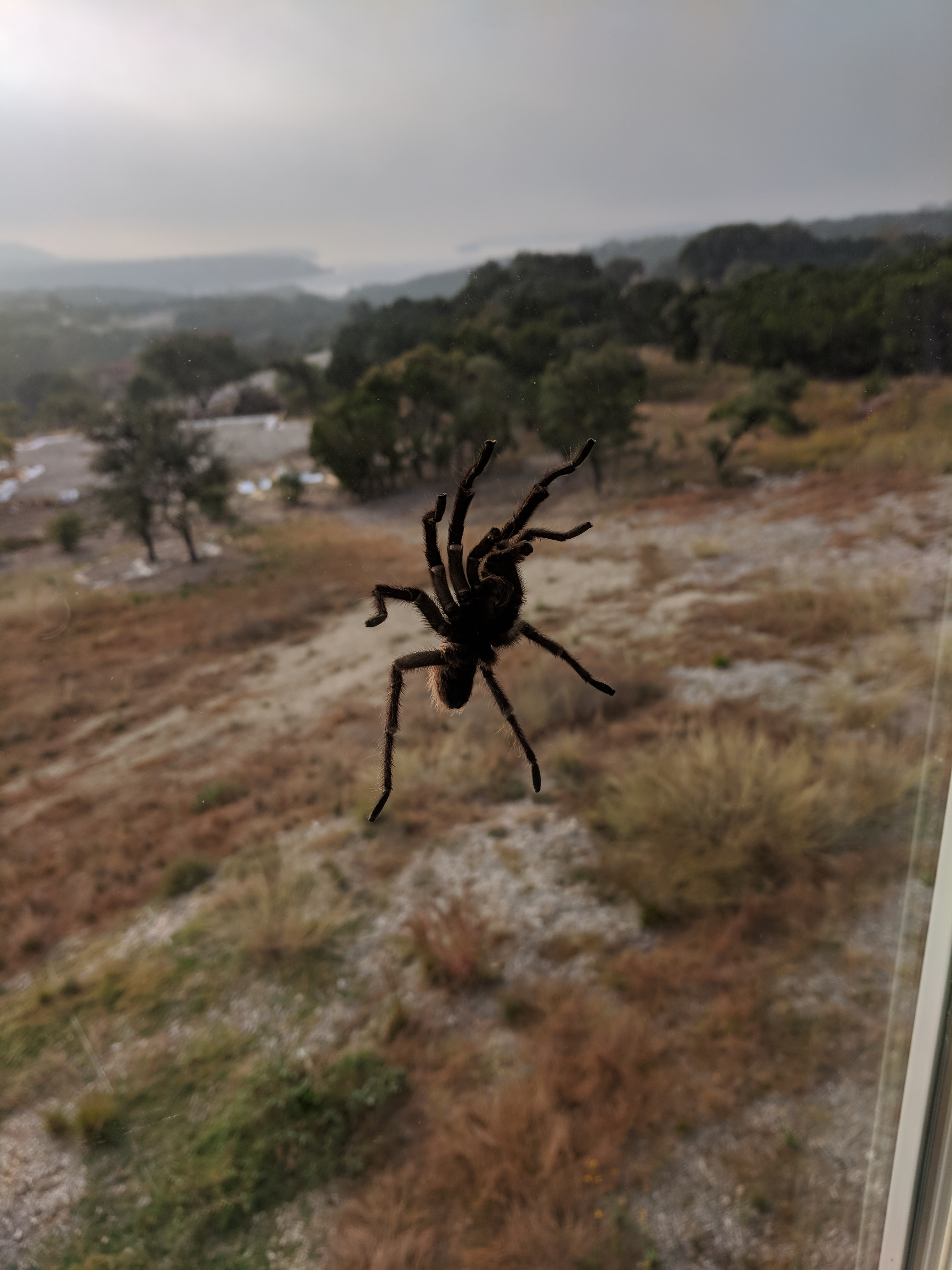 Image titlehttps://www.thespruce.com/the-tarantula-is-not-deadly-spider-2656757
