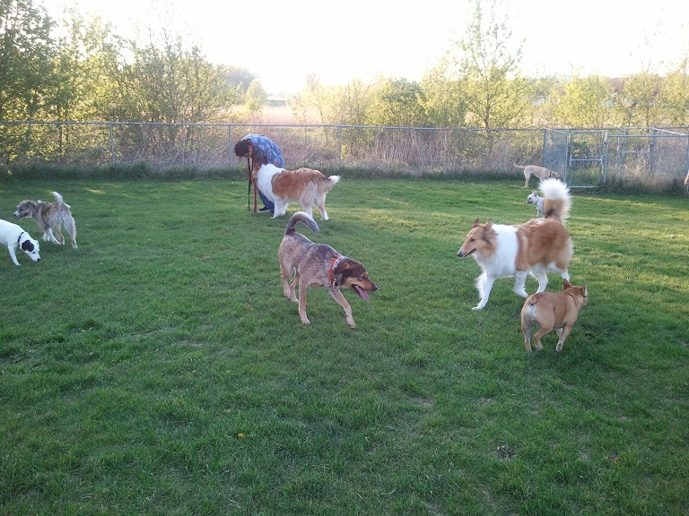 Second Frank Canine Park