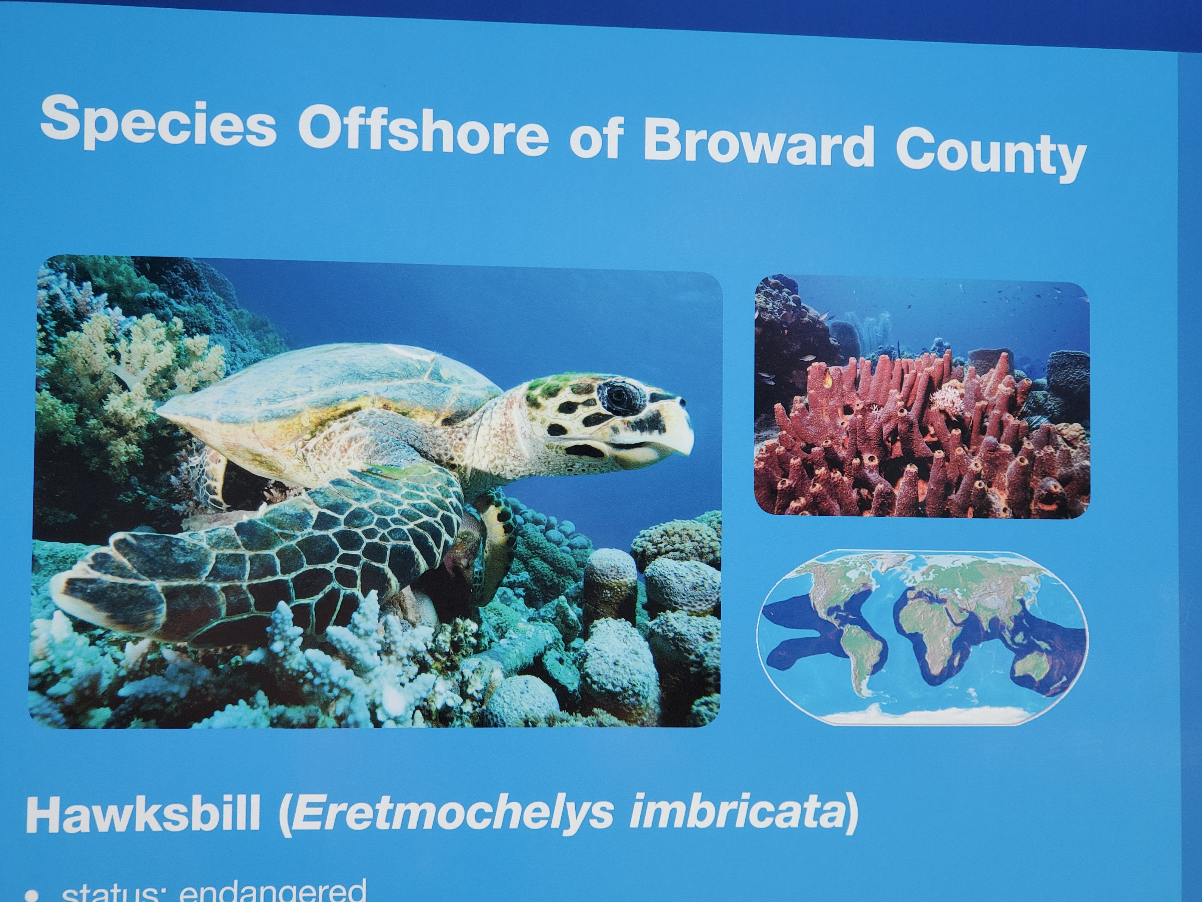 Ispecies of sea turtles in Broward County Florida