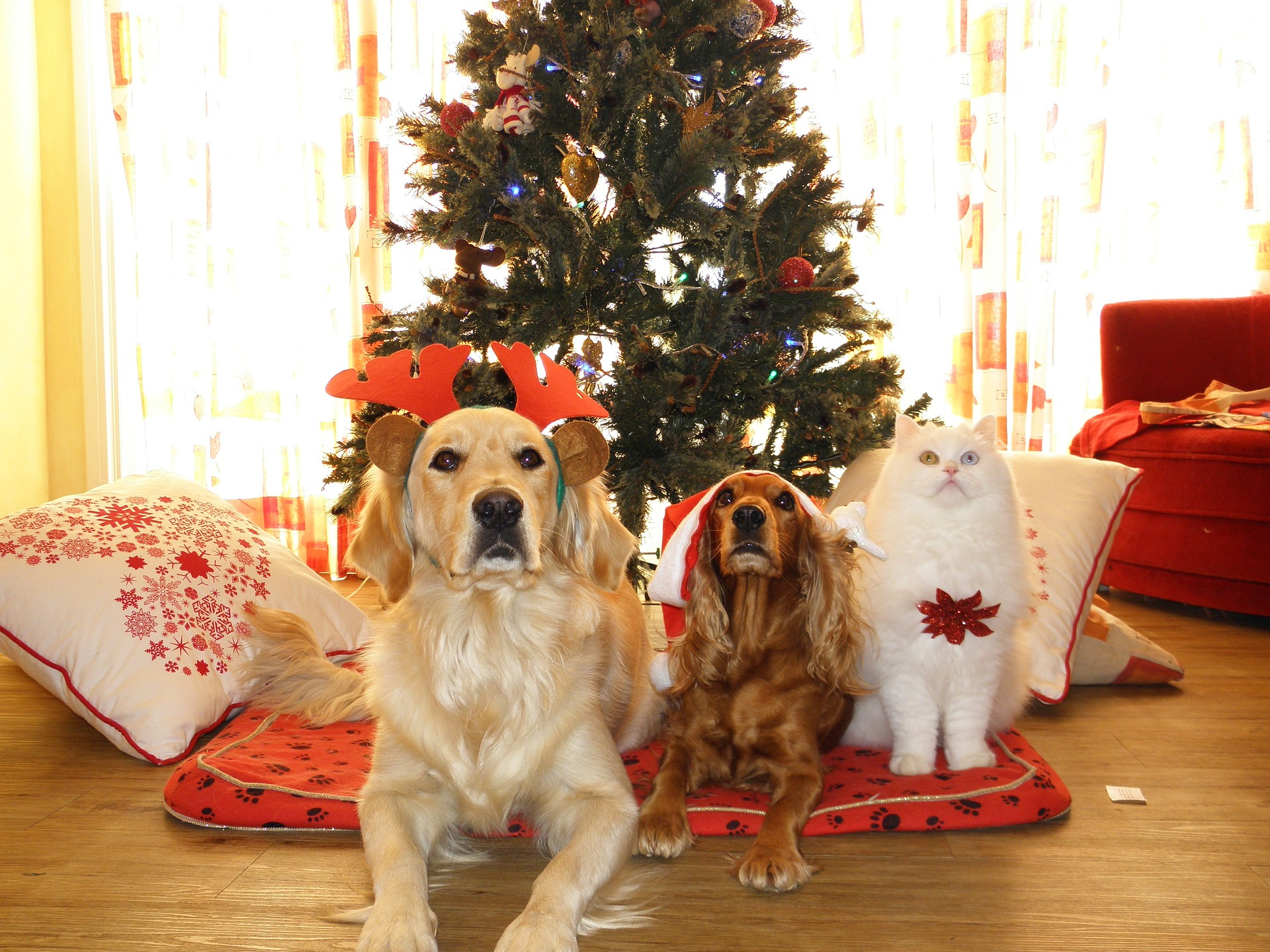 Taking Care of Your Pets Over the Bustling Holiday Season
