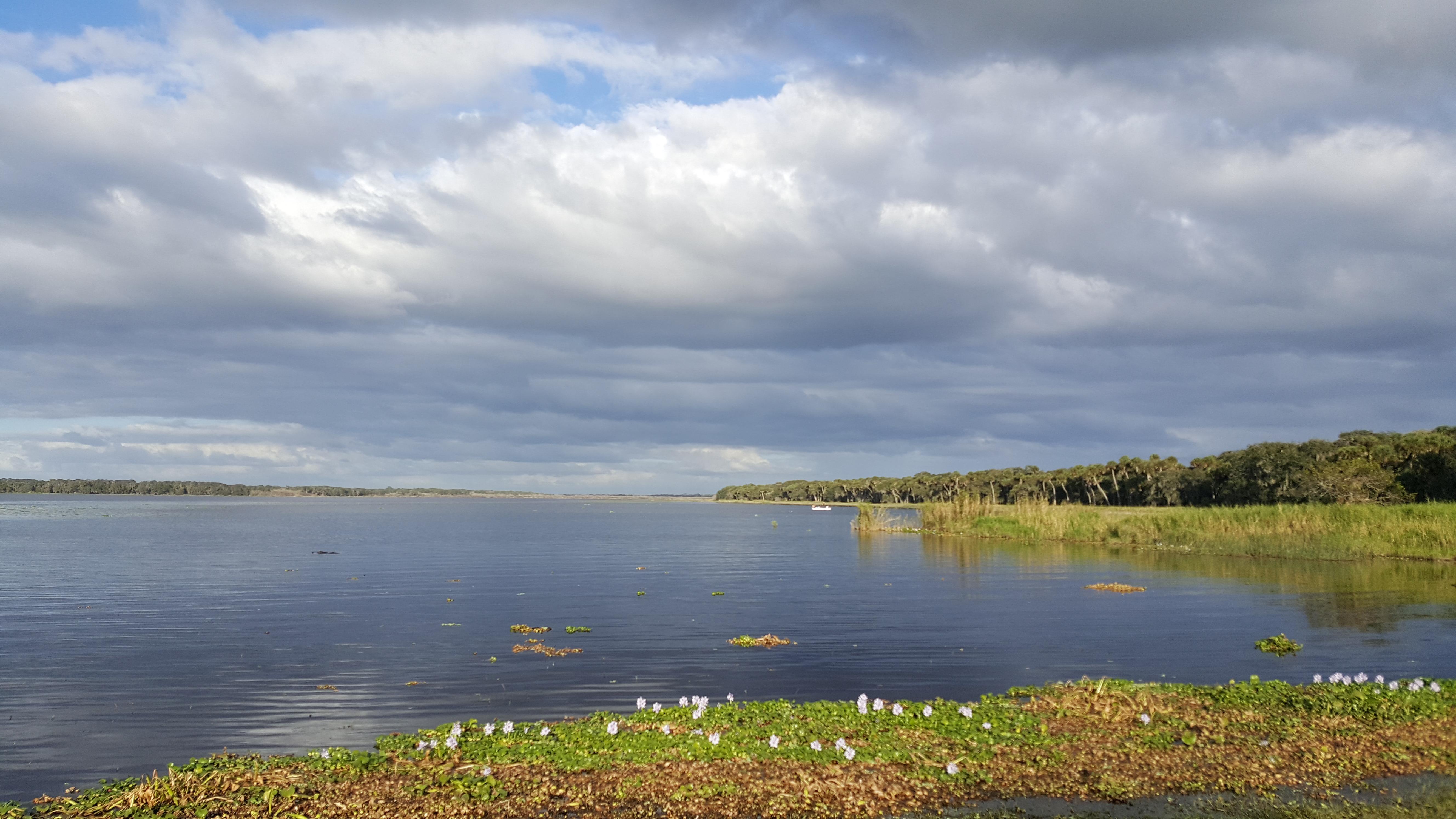 Taken by Betty Burg, Myakka River State Park