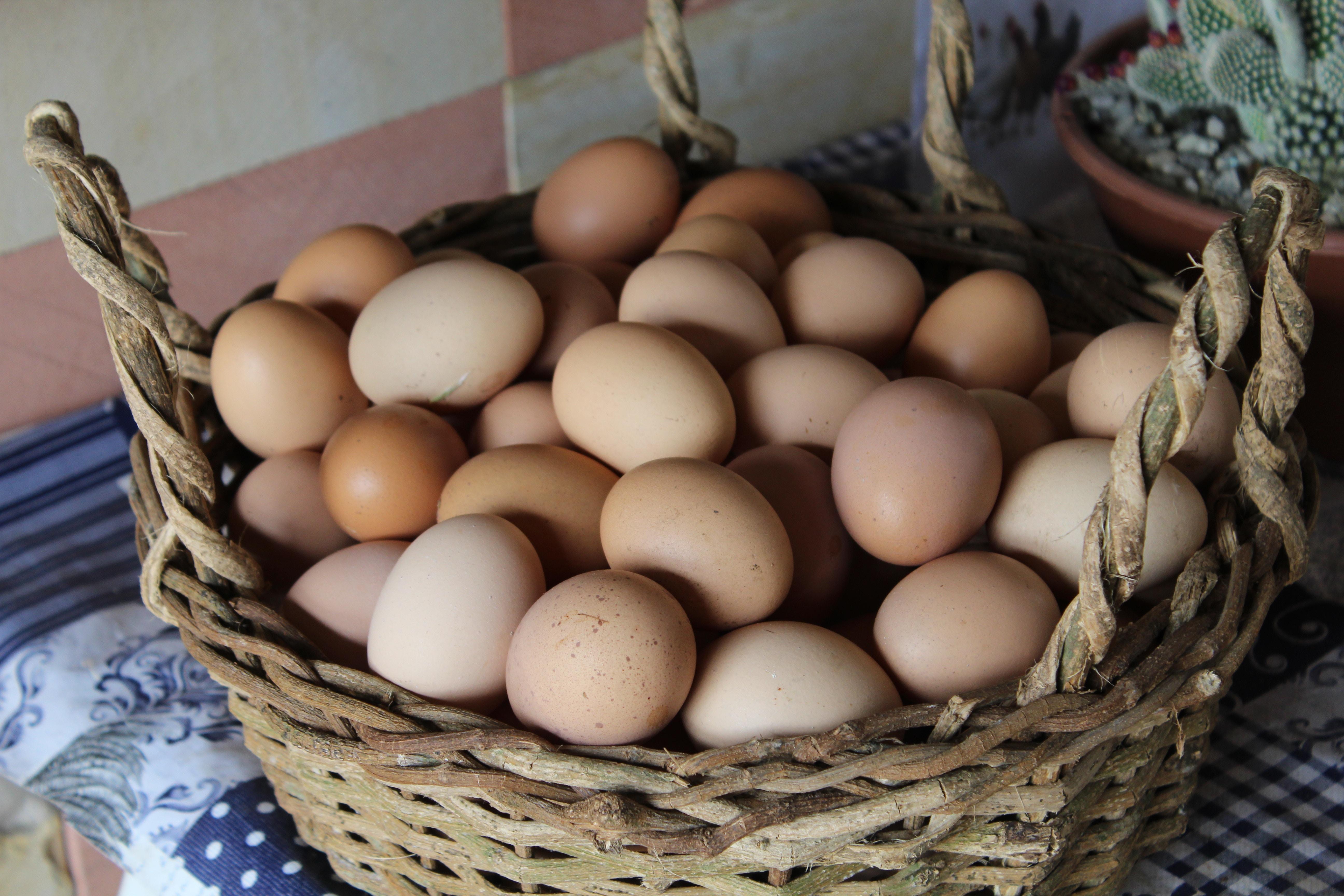 Fresh eggs from Las Vegas? chickens?