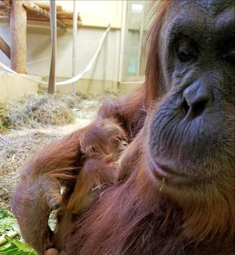 Sumagu and baby
