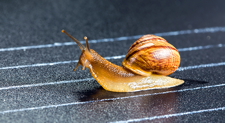 snail slow housing market due to low inventory