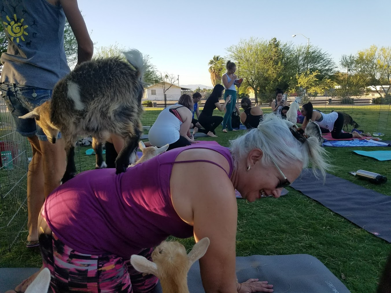 Beth Elkyn herself doing table top at goat yoga