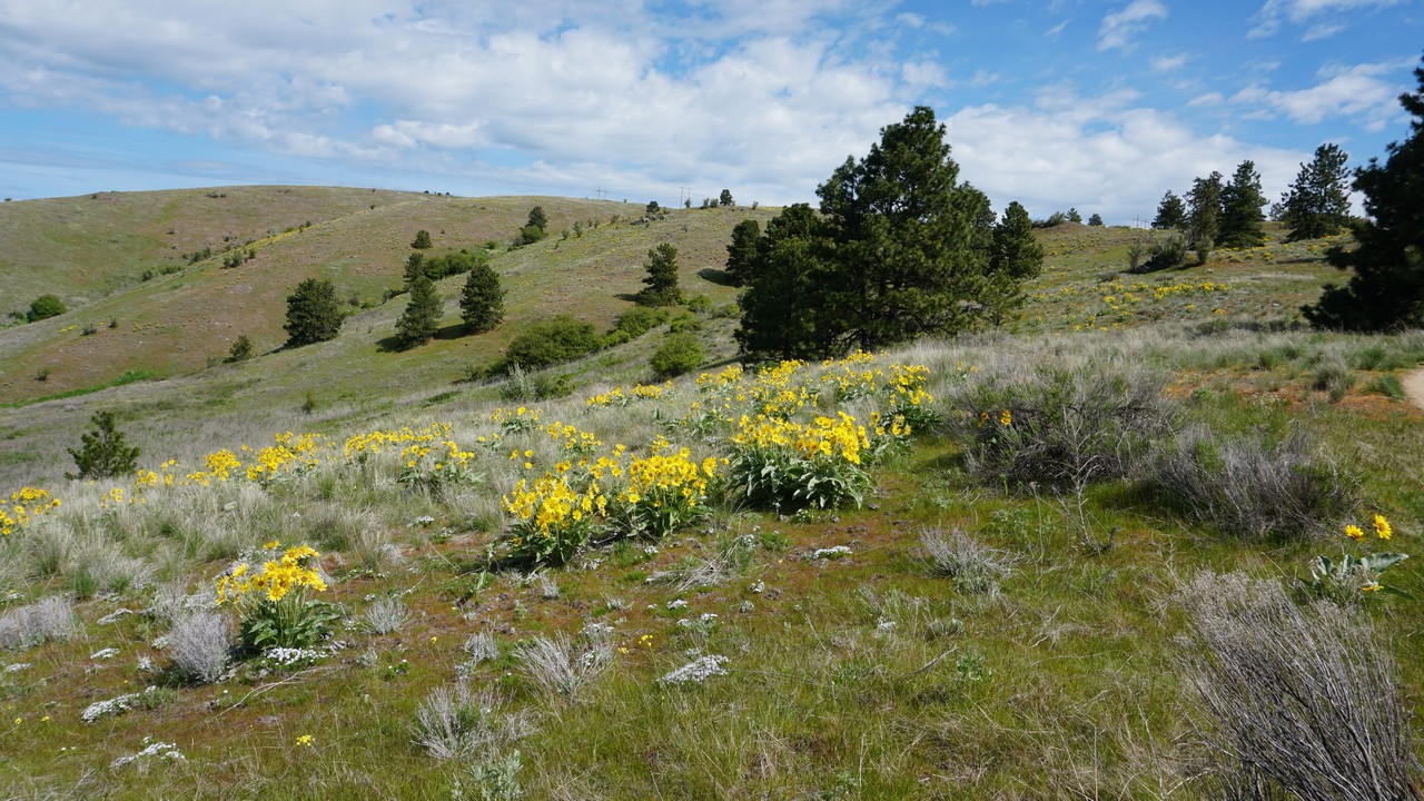 Saltese Uplands Conservation Area