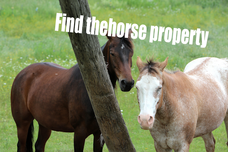 Horse photo lifeofpix