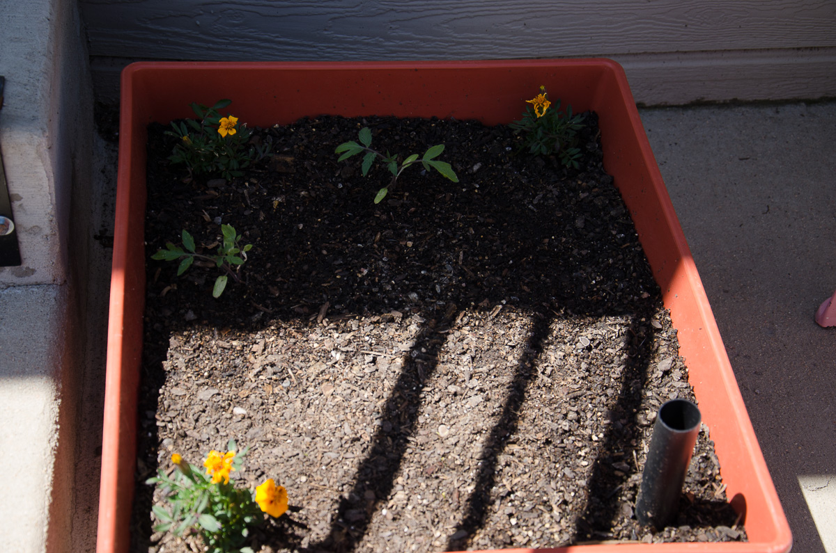 City Picker Self-Watering Container