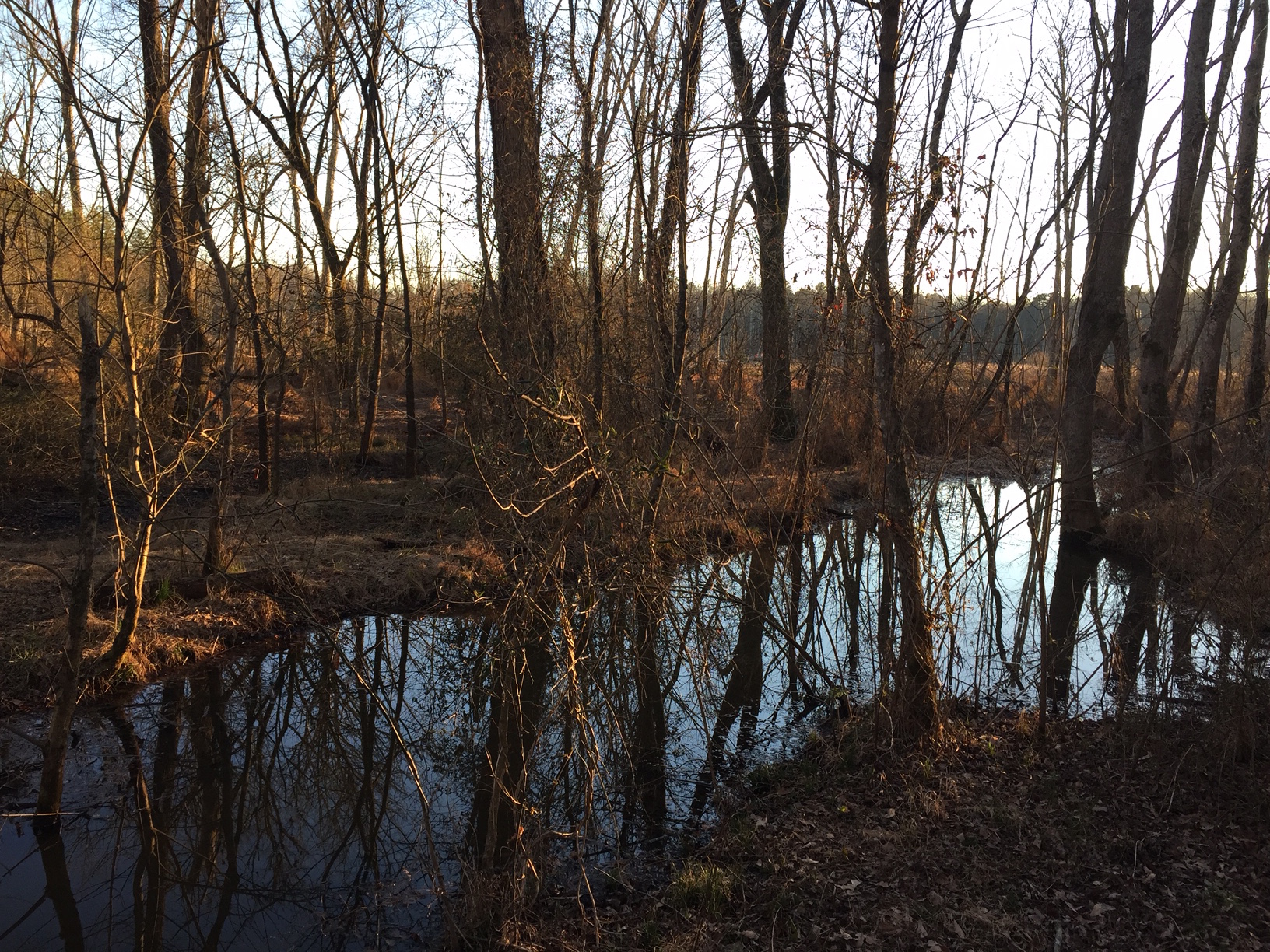 Wetlands near Heron Circle Trail