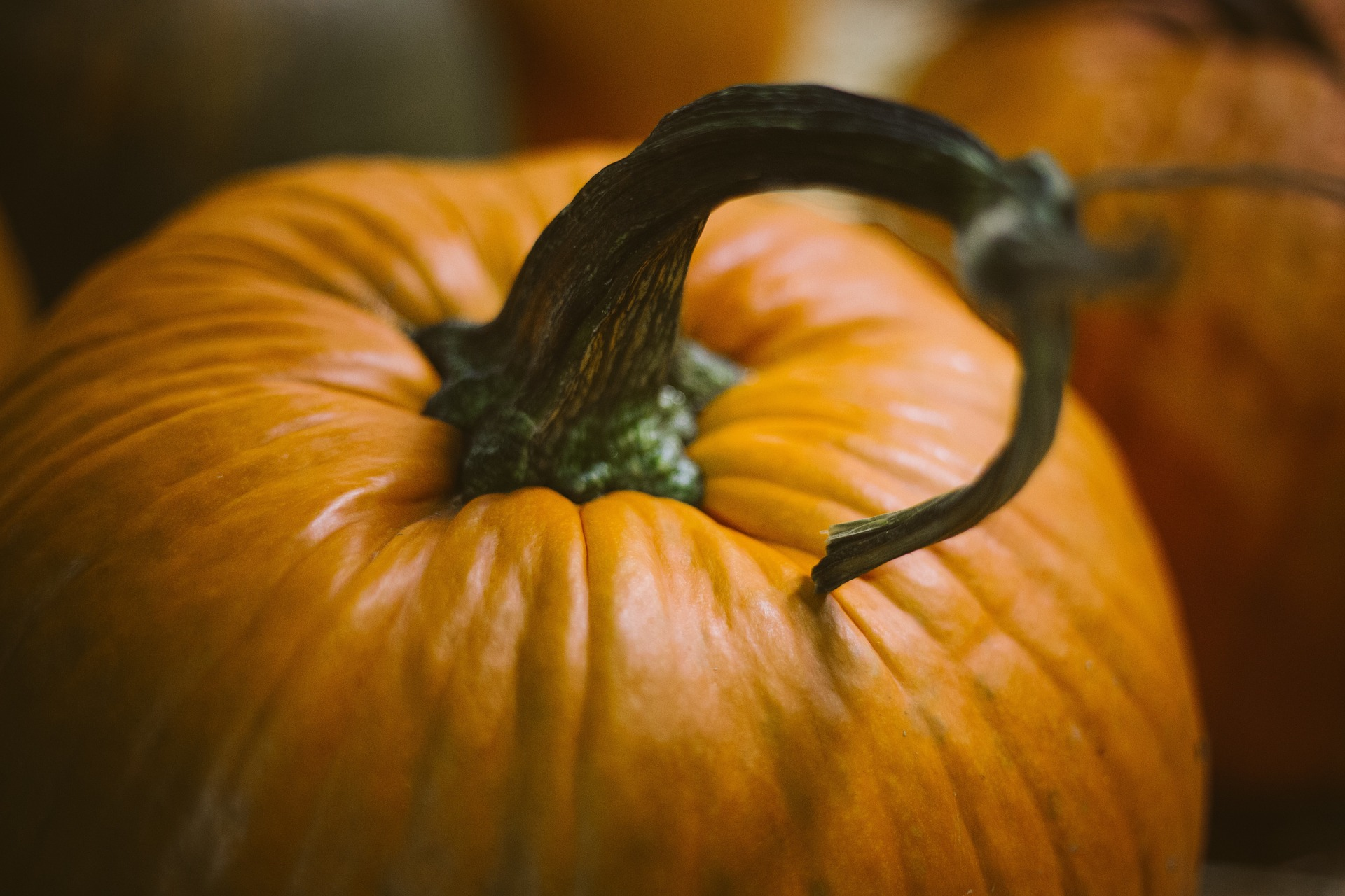 Pick a perfect pumpkin at one of these 7 super spots in Northern NJ!