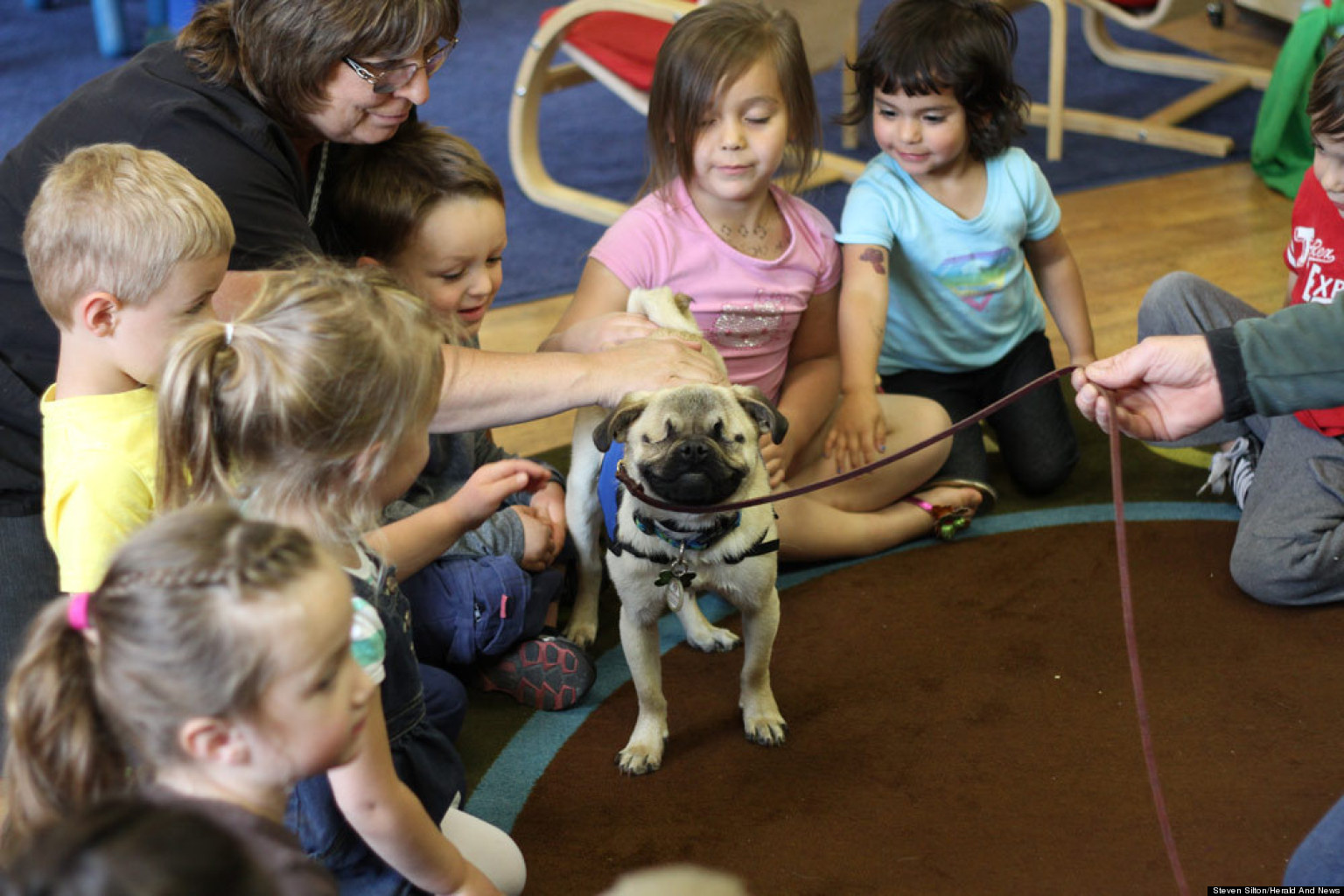 Xander The Blind Pug, The Huffington Post