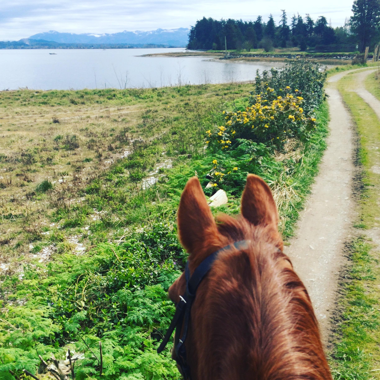 Samish Island Trails