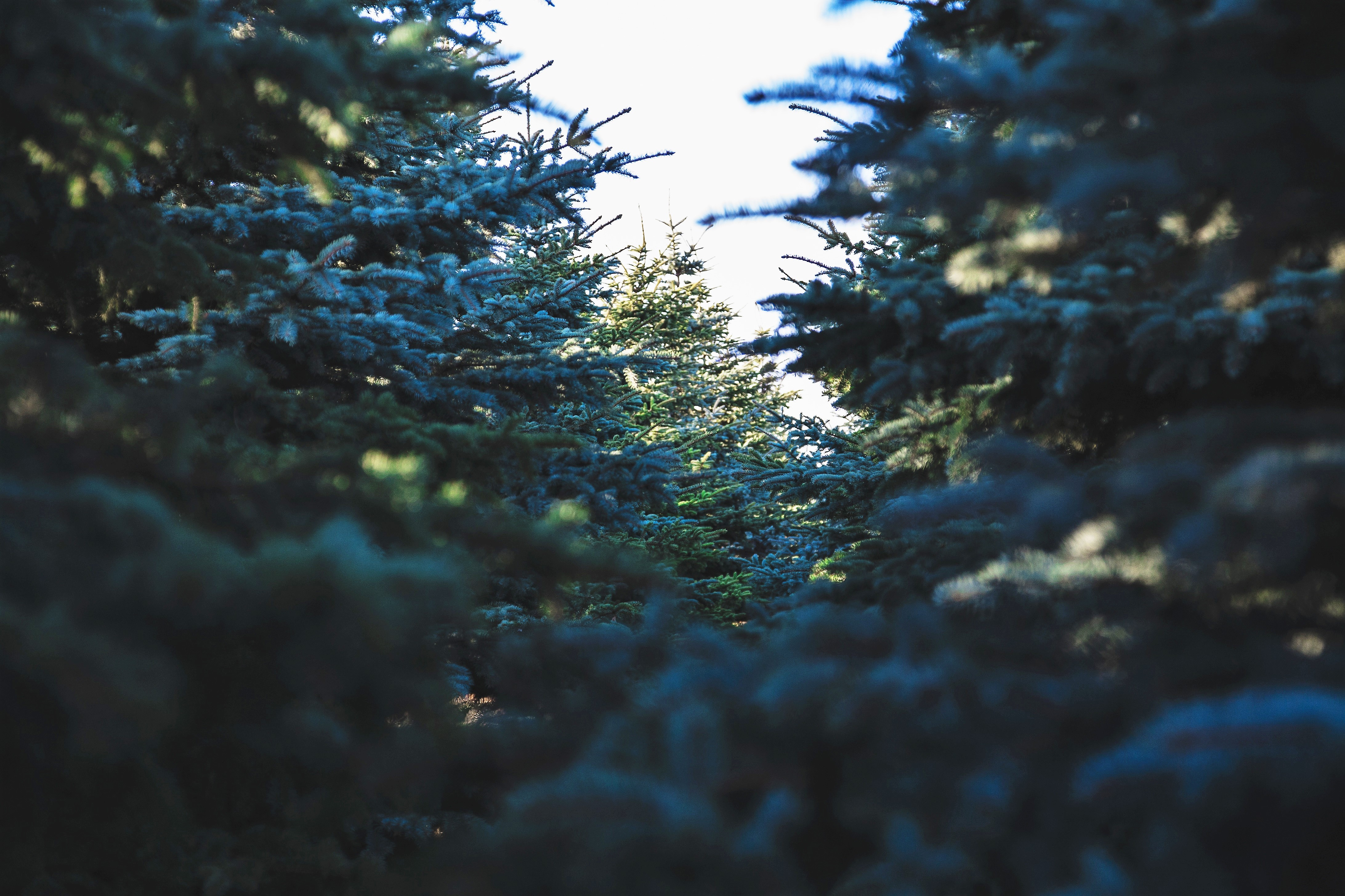 List Of Cut Your Own Christmas Tree For Morris County NJ