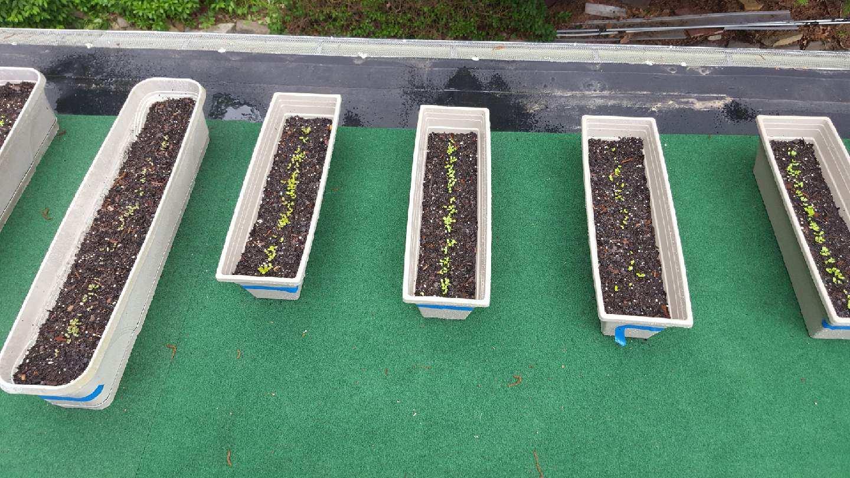 Elen's lovely little seedlings sprouting.