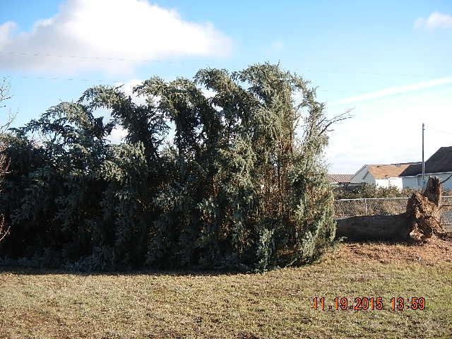 Tree down in Deer Park, WA