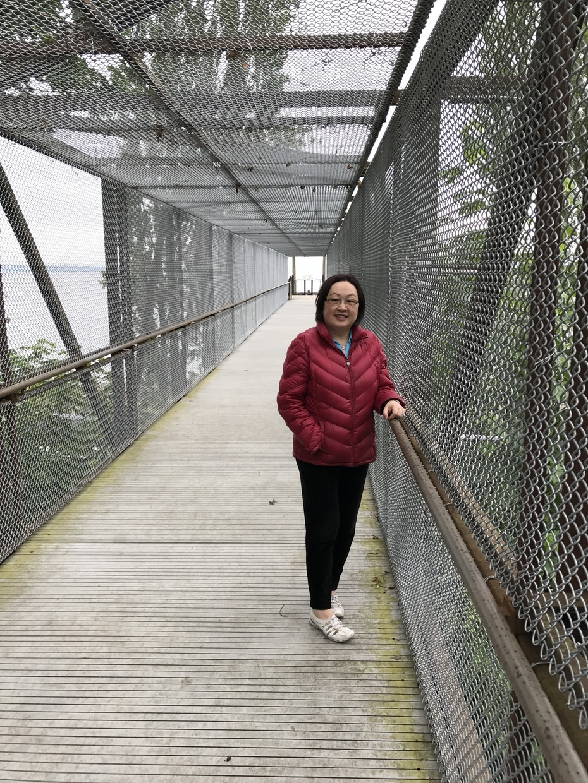 Bridge to viewing platform