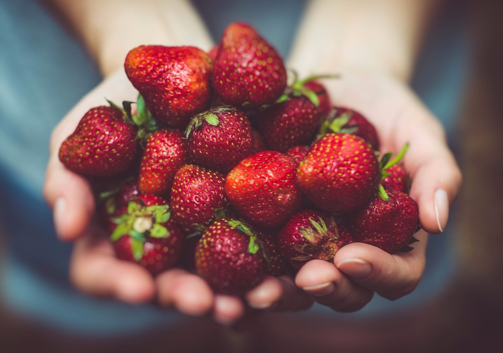 Pick-Your-Own Strawberries in Chester this weekend.