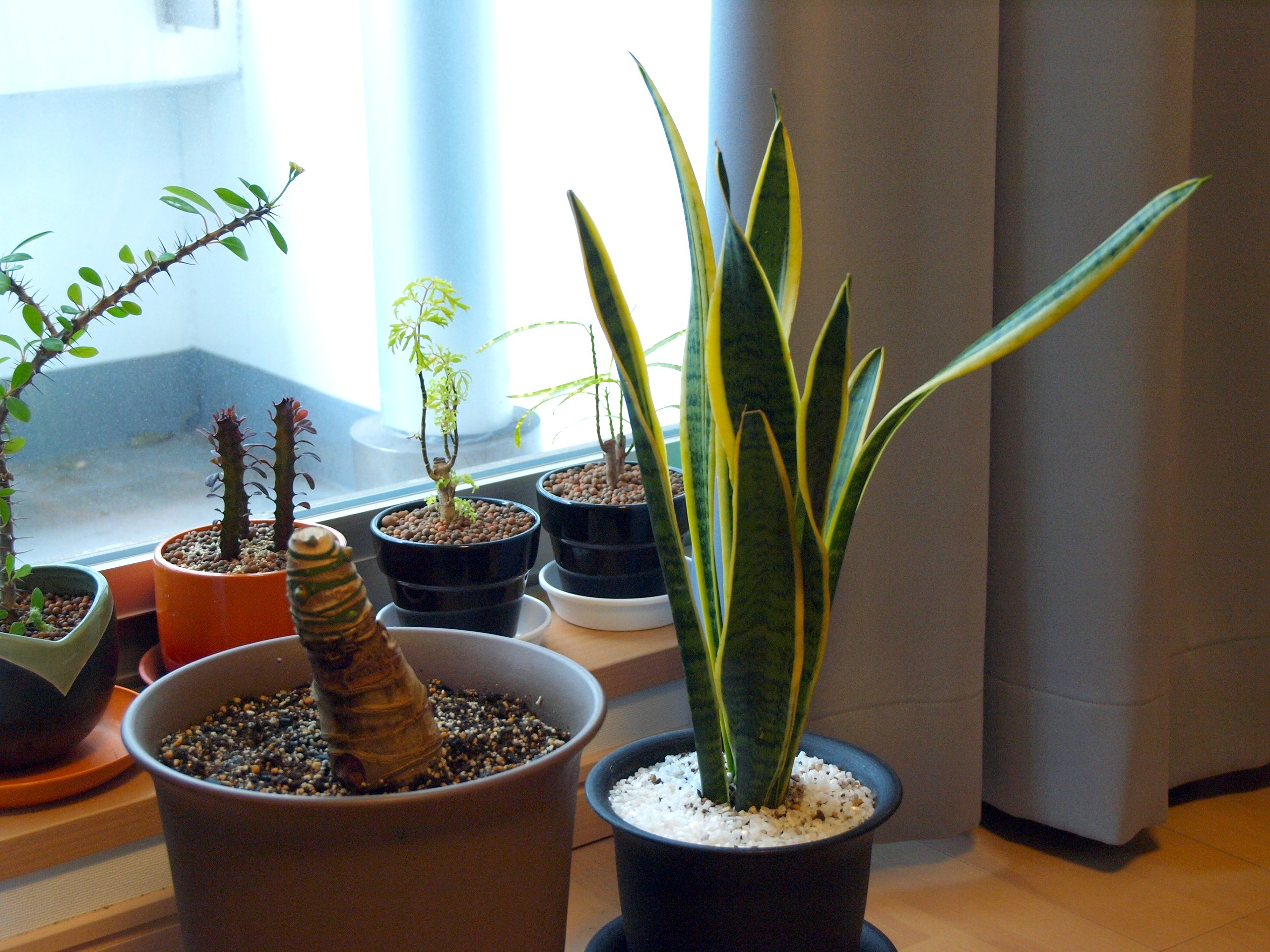 FIVE TIPS FOR MAINTAINING HOUSEPLANTS