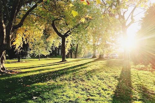 Milton image trees