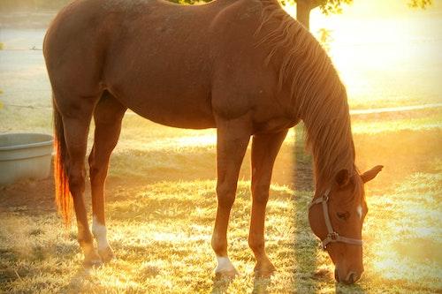 Alpharetta image horse