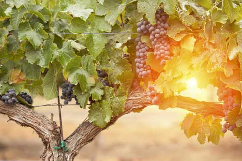 Search Temecula Wine Country Homes For Sale
