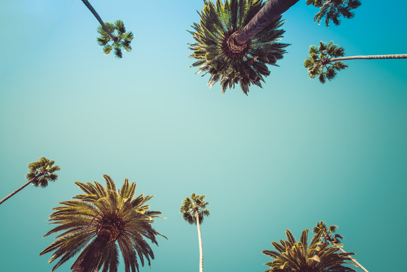 Image of sky with palm trees