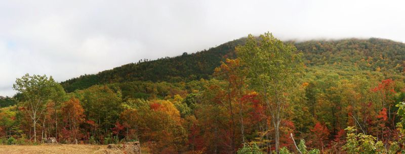 Green lush mountain with trees