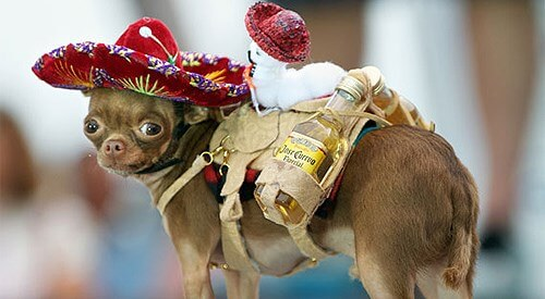 Participant in the Chihuahua race