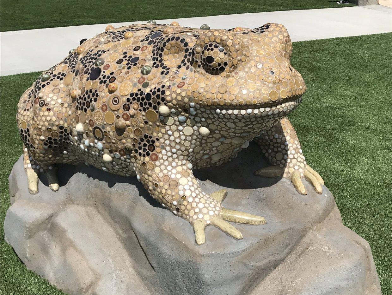 Playground Frog